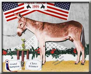 Banjo Grand Champion Jack at the All Star Mule and Donkey Show