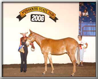 Banjo's Hotrod standing Grand Champion Mule as a Yearling